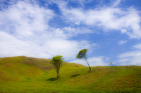 Trees and Hill (near Hinche, Haiti; July 2011)