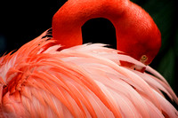 Flamingo (New Orleans)