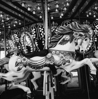 Carousel Horse (Central Park NYC, August 2009)